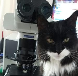 Office cat, Tony